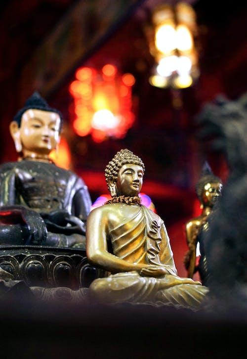 Free stock photo of buddha, buddhism, buddhist