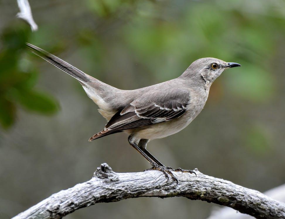 Immagine gratuita di ala, albero, ambiente