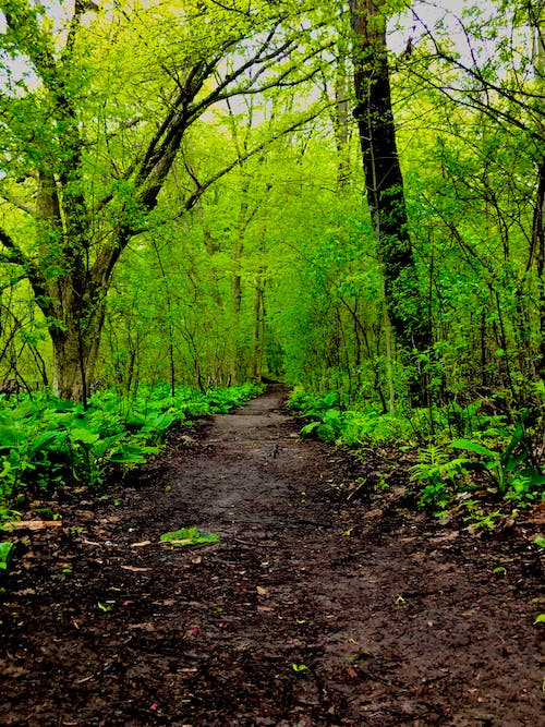 Free stock photo of forest, green forest, green leaves