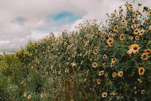 Yellow Flowers Under Blue Sky