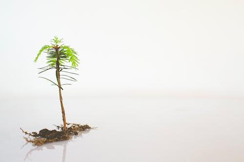 Gratis stockfoto met alleen, alleen op wit, blad, bloemen
