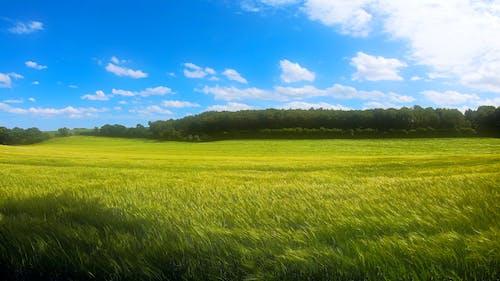 Foto profissional grátis de campo agrícola, campo verde, céu azul, céu de brigadeiro