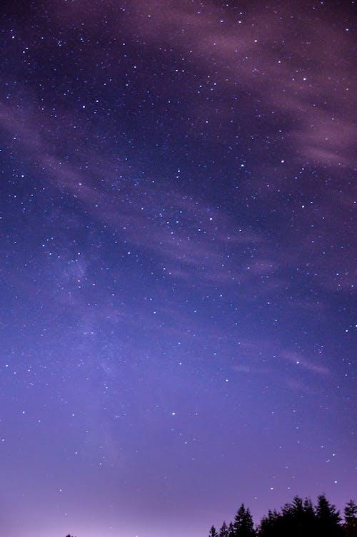 구름, 나무, 밤의 무료 스톡 사진