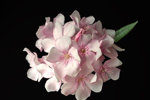 Imagine de stoc gratuită din flori