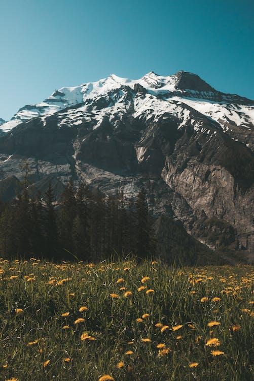 Yellow Flower Field Near Mountain