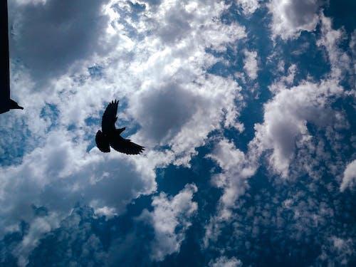 Základová fotografie zdarma na téma fotografie, fotografie přírody, fotografie ptáků, létání ptáků