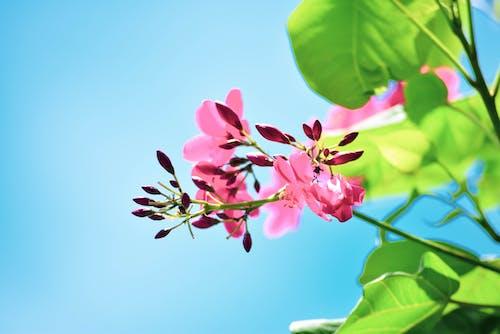 Free stock photo of background, beautiful flower, bokeh, bud