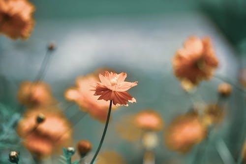 Free stock photo of background, beautiful flower, blurred backgound, bokeh