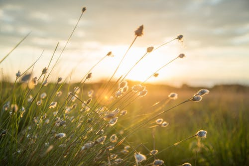 國家, 增長, 太陽, 景觀 的 免费素材照片