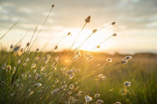 Free stock photo of landscape, field, flowers, sun