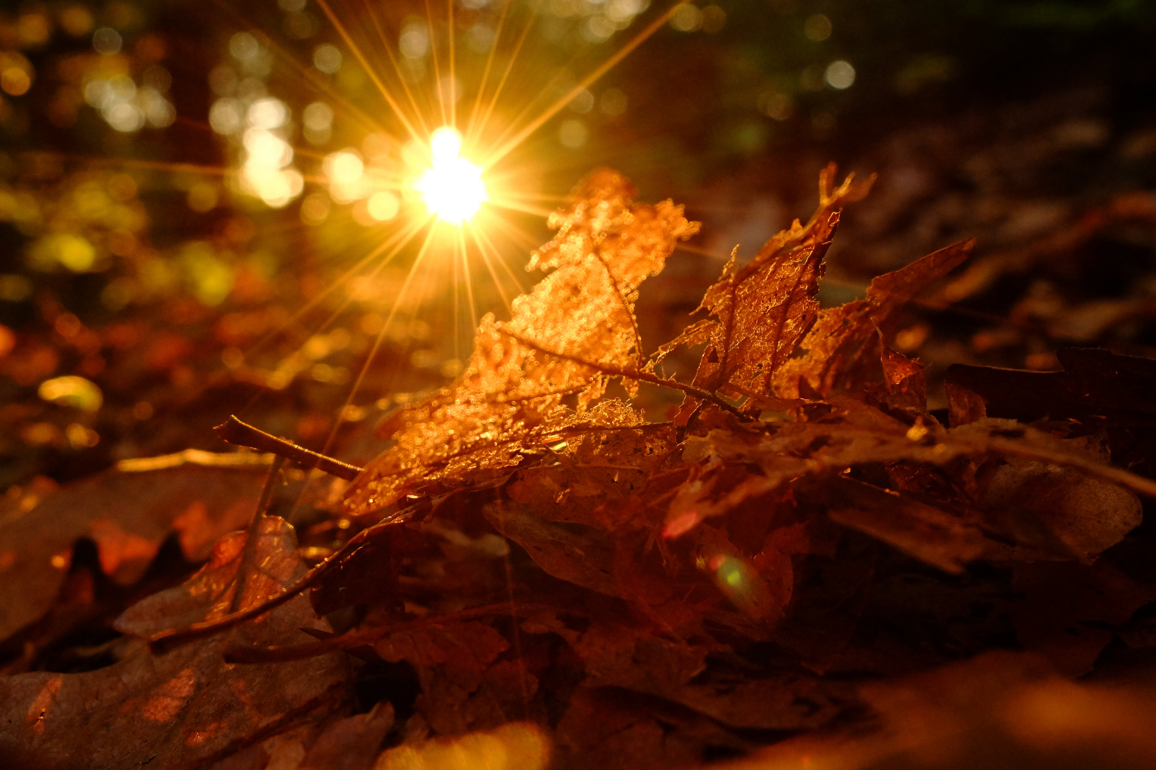 Free stock photo of backlight, forest, leaf, sun