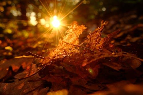 Безкоштовне стокове фото на тему «Захід сонця, ліс, підсвітка, сонце»