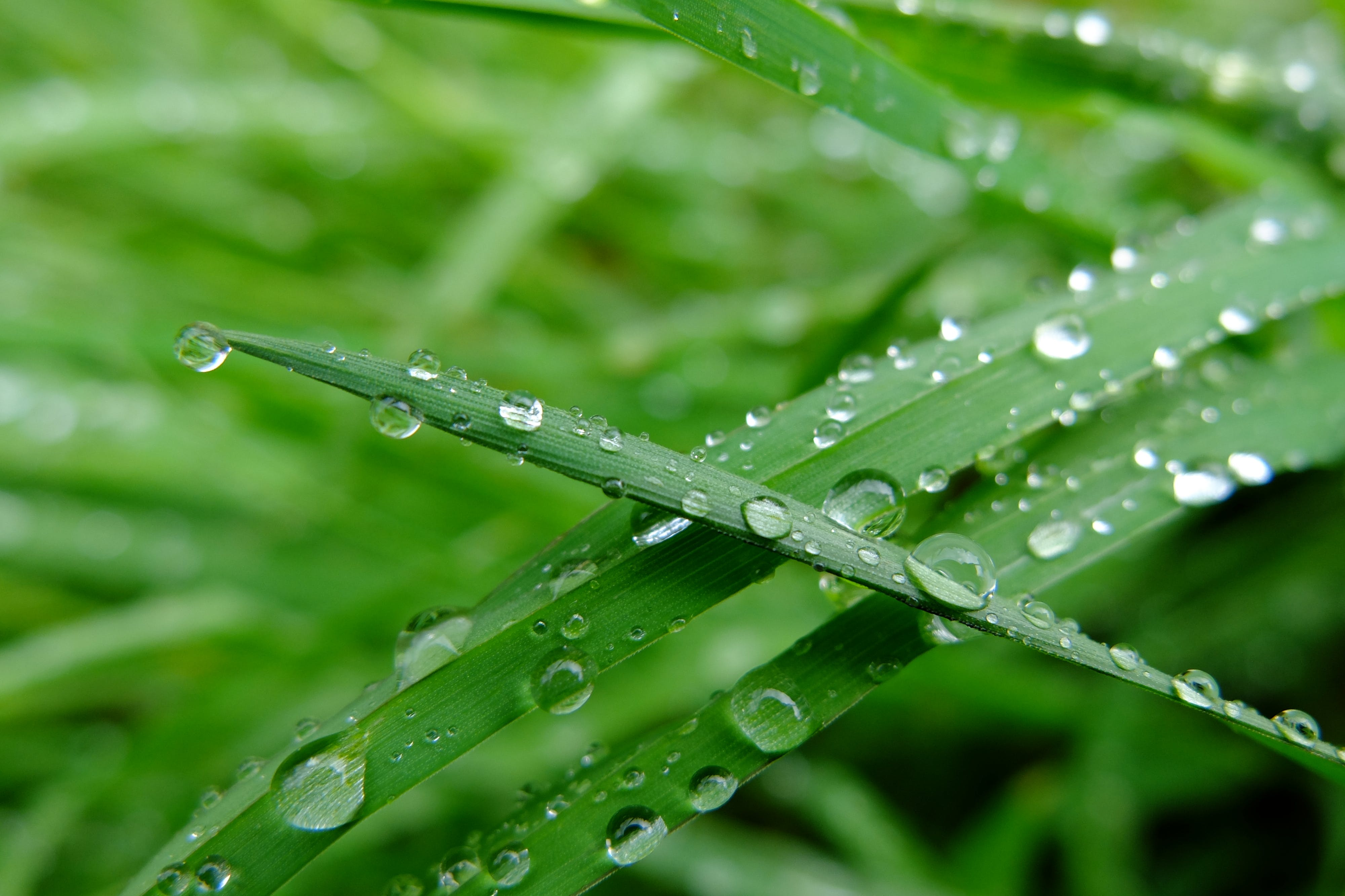 Free stock photo of grass, rain, spring, water drops