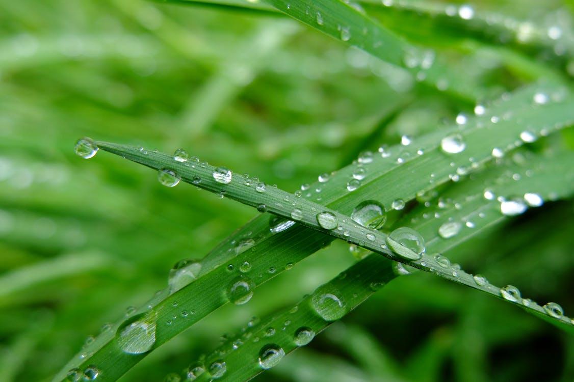물방울, 비, 잔디