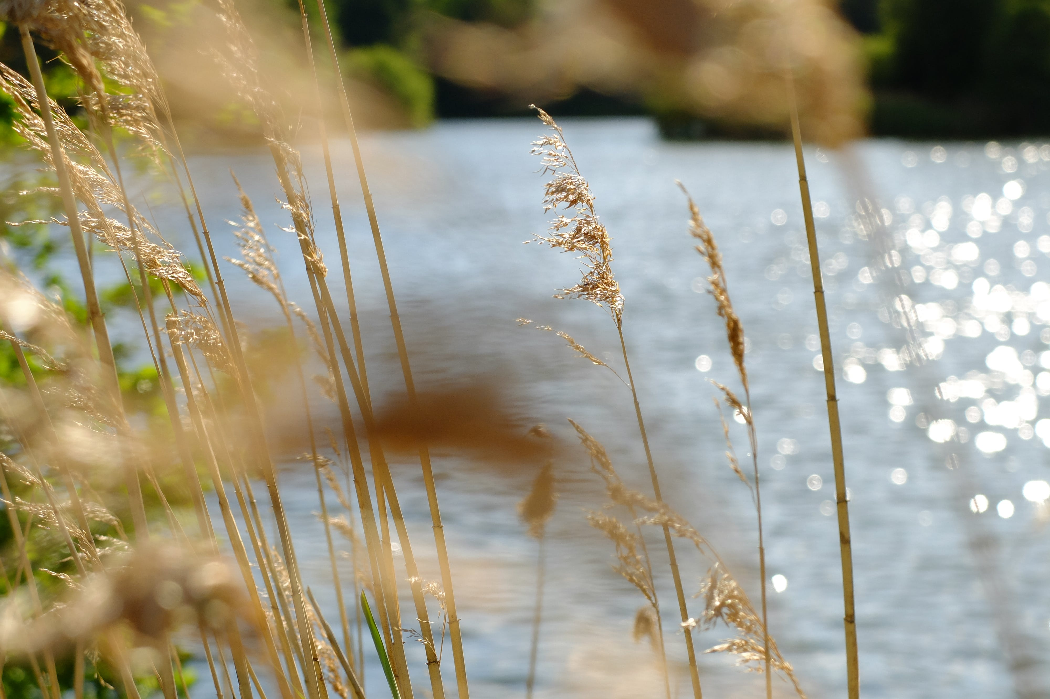 Free stock photo of grass, pond, summer