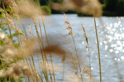 여름, 연못, 잔디의 무료 스톡 사진