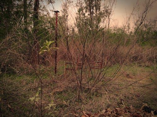Fotos de stock gratuitas de amanecer, arboles, basura, bosque