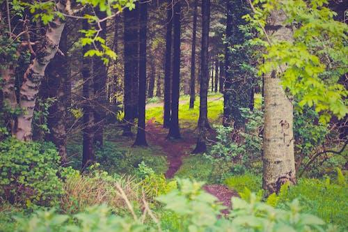 Ingyenes stockfotó erdő, fák, fű, gyárak témában