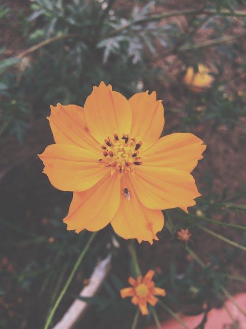 Free stock photo of alaranjado, arte da flor