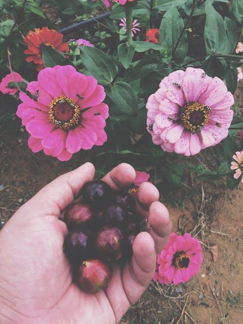 Free stock photo of fruta