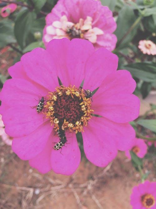 Free stock photo of beleza na natureza