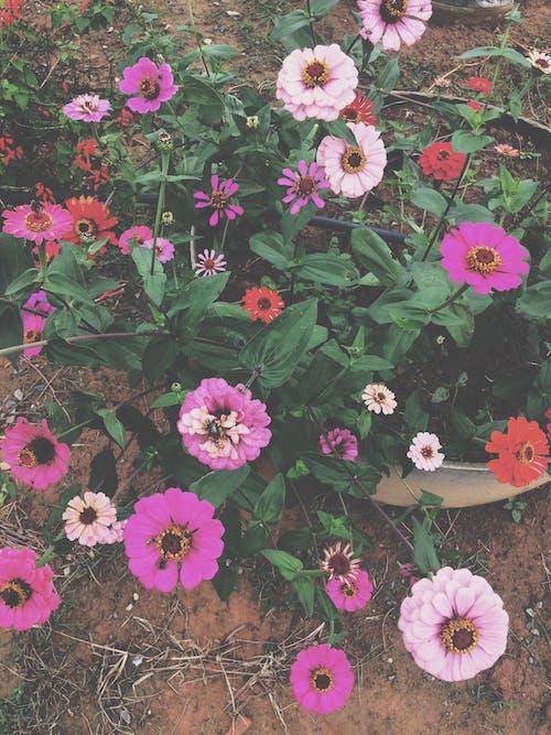 Free stock photo of arranjo de flores