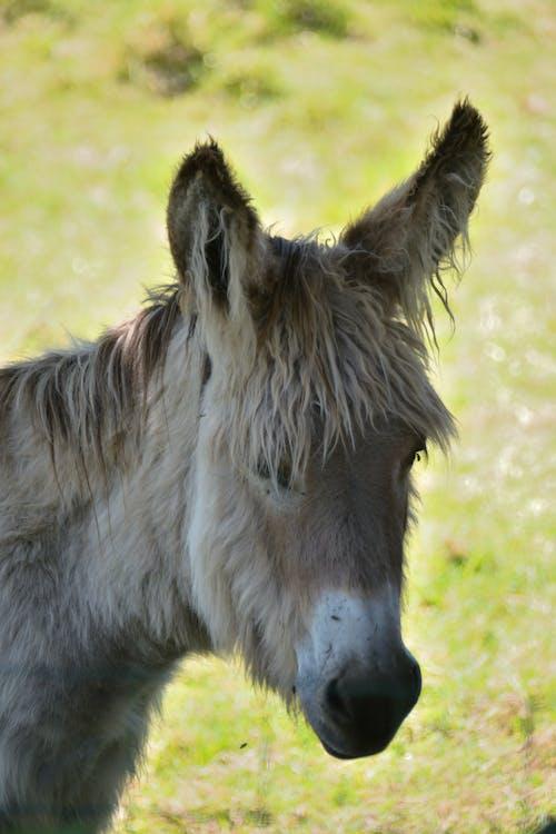 Free stock photo of âne, animal, ferme
