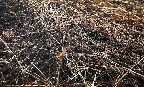 Kostnadsfri bild av bakgrund, djurmat, färsk, gräs