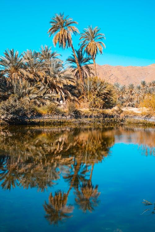 Foto d'estoc gratuïta de a l'aire lliure, Àfrica, aigua, aïllat