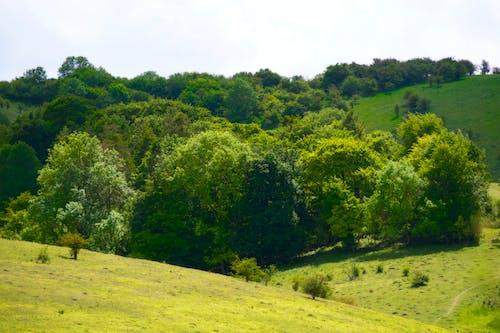Foto profissional grátis de árvores, bedfordshire, campos verdes, chácara