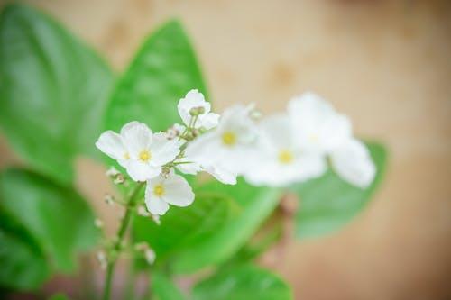 Ảnh lưu trữ miễn phí về độ tinh khiết, dof, hệ thực vật, hoa