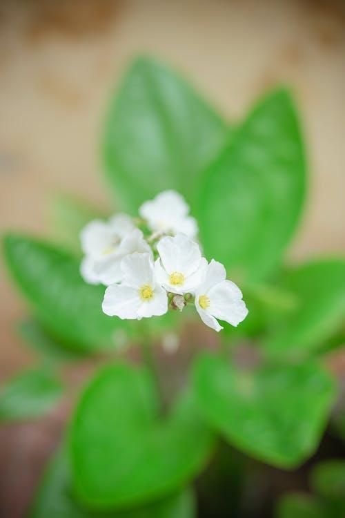 Ảnh lưu trữ miễn phí về cánh hoa, cỏ, độ tinh khiết, dof