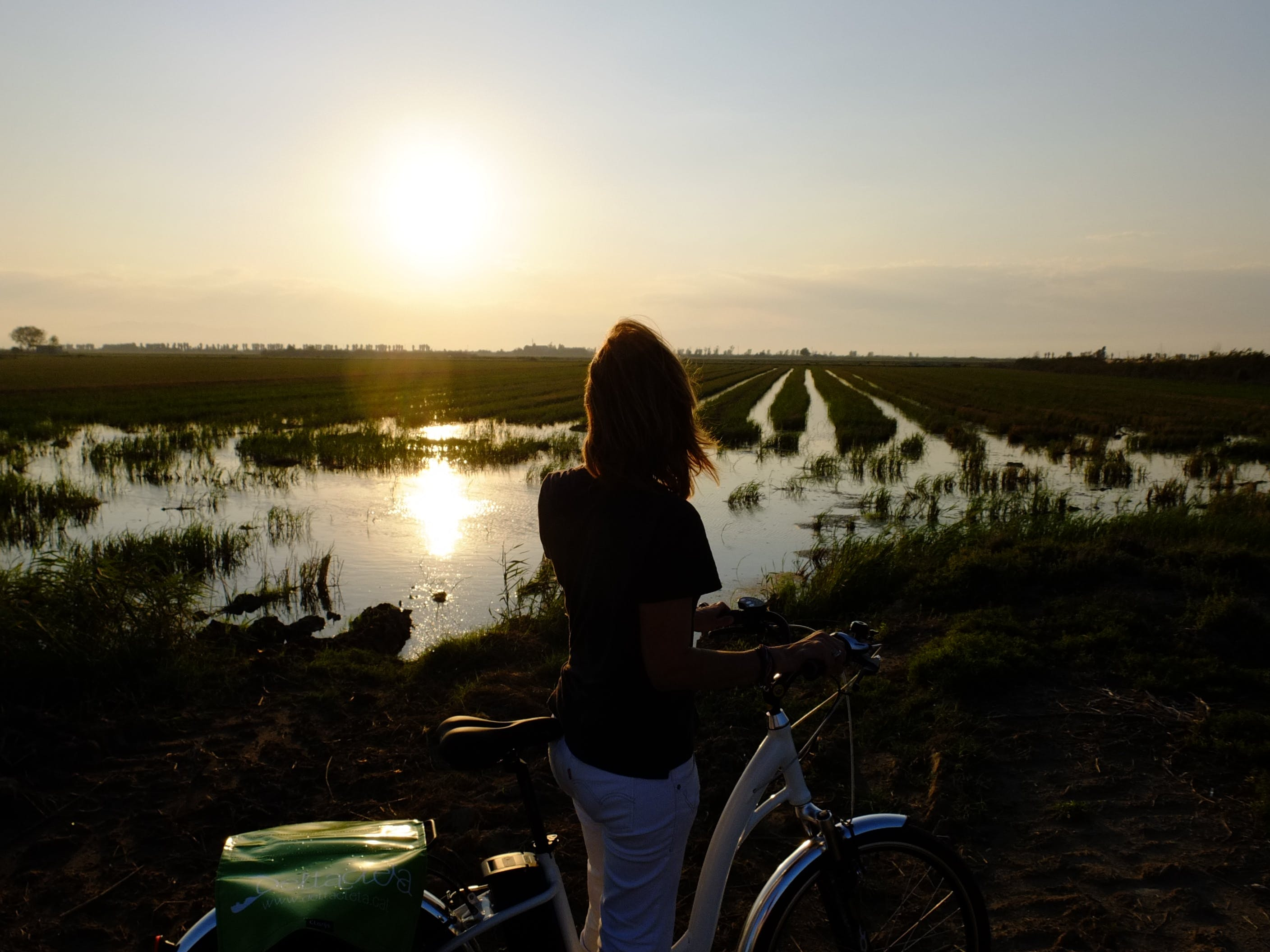 Free stock photo of nature, bicycle, rice field, Delta del Ebre