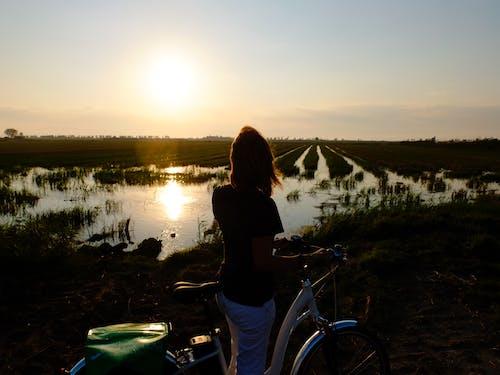 Gratis lagerfoto af cykel, delta del ebre, natur, rismark