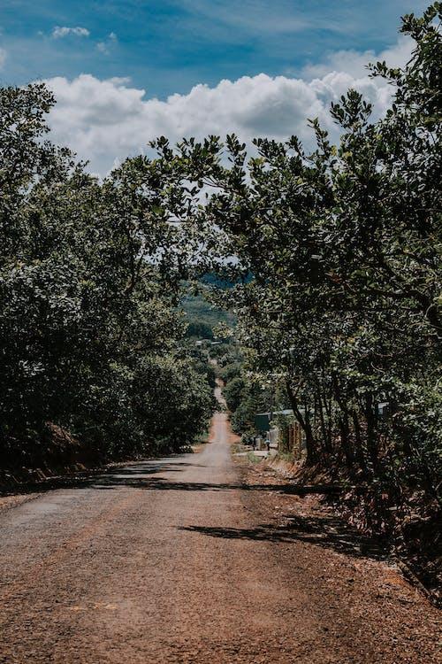 Photo of Road Between Trees