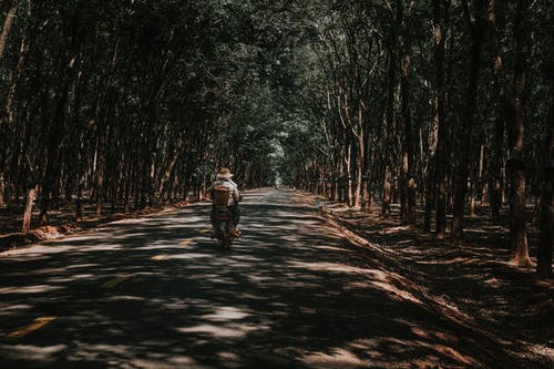 Photo of People Riding Motorcycle on Road Between Trees