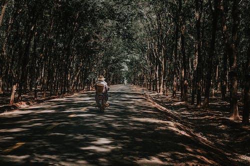 Gratis stockfoto met autorijden, begeleiding, bomen
