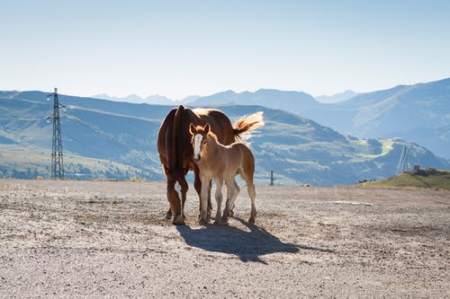 Photo of Two Brown Horses
