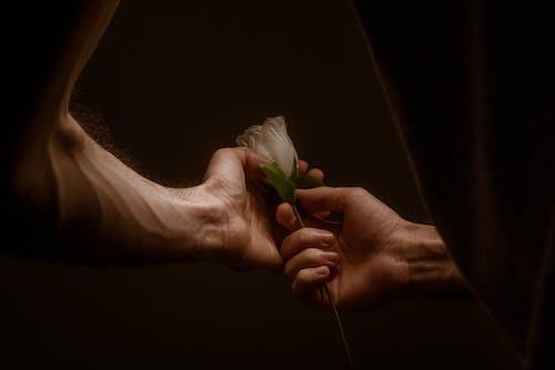 Darmowe zdjęcie z galerii z biała róża, cielisty, ciemny, cień
