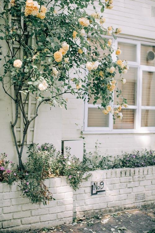 Kostenloses Stock Foto zu blätter, blühen, blühende pflanze