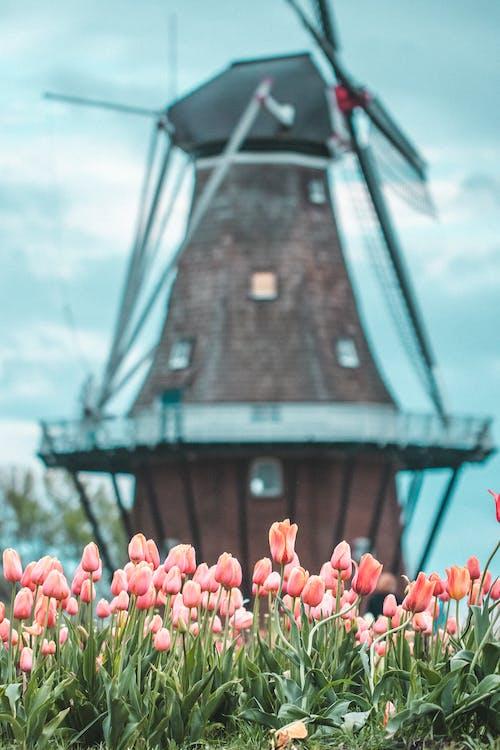 Základová fotografie zdarma na téma květinový, květiny, oblačno