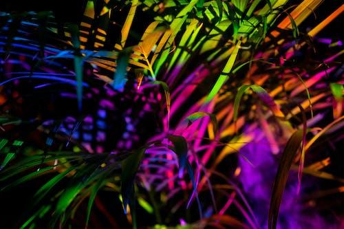 Gratis stockfoto met abstract, abstracte vormen, artistiek, blad