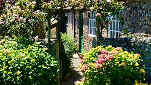 Kostnadsfri bild av anläggning, bakgård, blommor, blomning