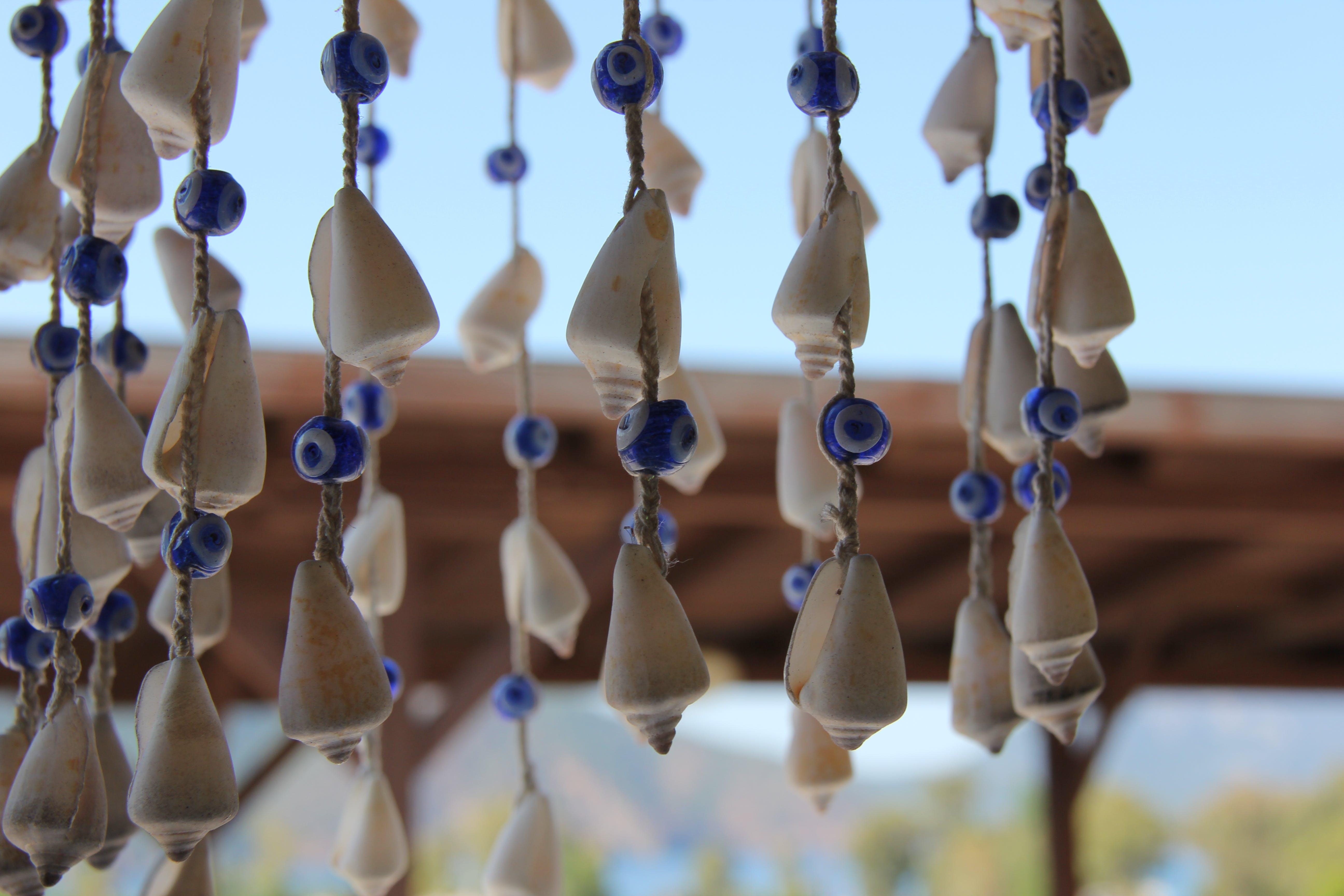 Základová fotografie zdarma na téma eveleye, lastury, léto, pláž