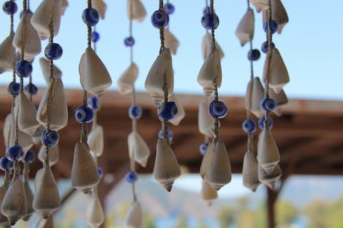 Foto profissional grátis de conchas do mar, decoração, eveleye, litoral