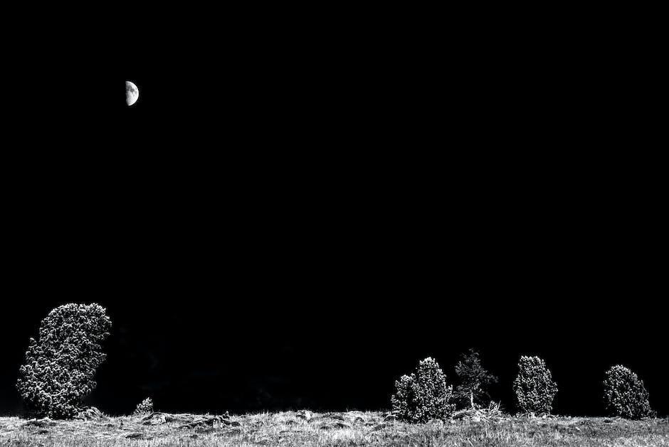 dark, grass, half moon