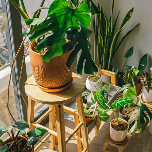 Green Plant on Brown Wicker Pot on Brown Wooden Chair