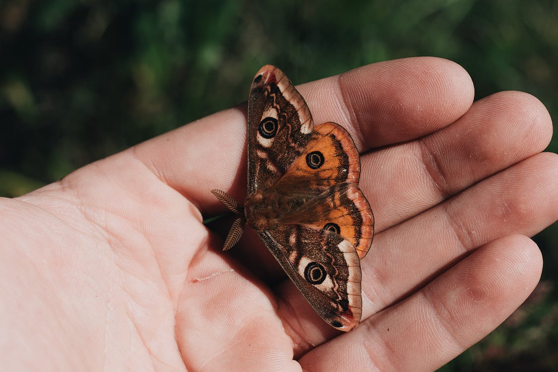 Brown and White Butterfly on Person's Hand