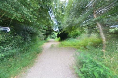 chemin, vitesse, 절제, 줌의 무료 스톡 사진