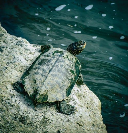 Turtle on stone near sea water